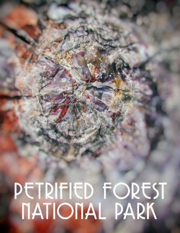View Petrified Forest National Park by Kyle Hanson