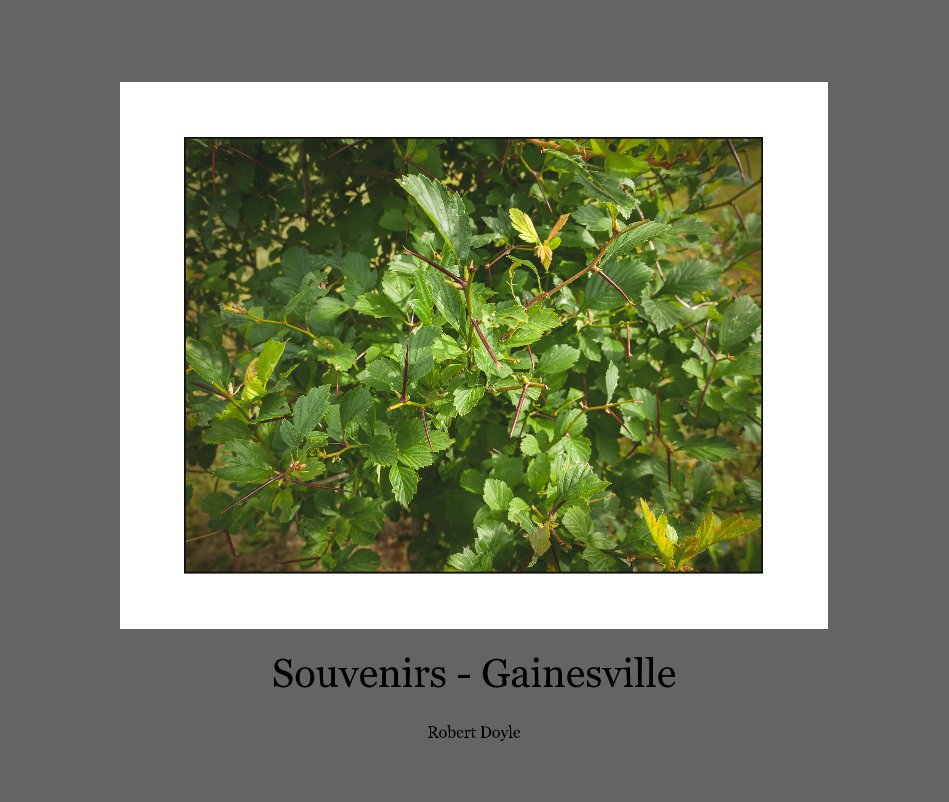 View Souvenirs - Gainesville by Robert Doyle