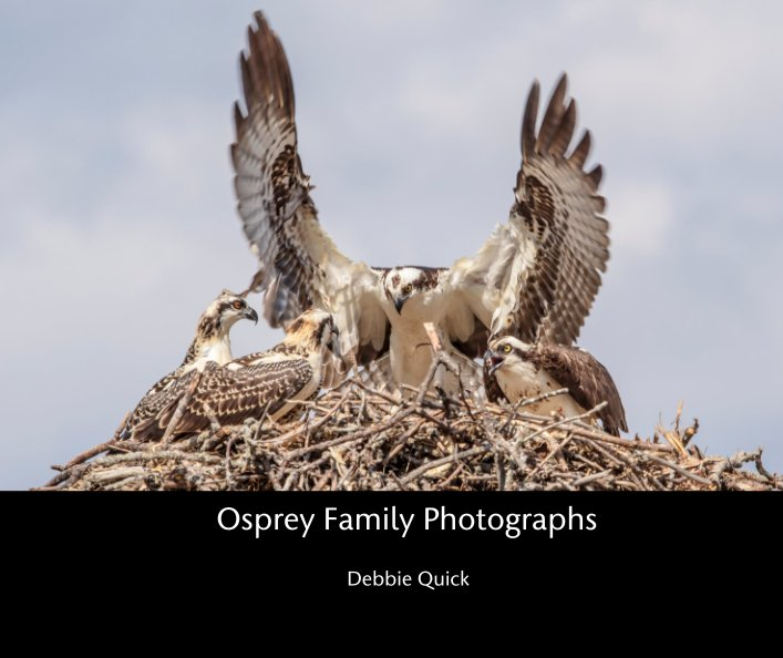 View Osprey Family Photographs by Debbie Quick