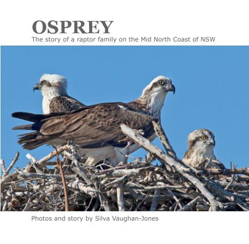 View Osprey by Silva Vaughan-Jones