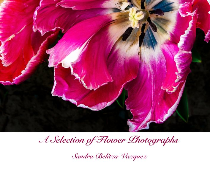 View A Selection of Flower Photographs by Sandra Belitza-Vazquez
