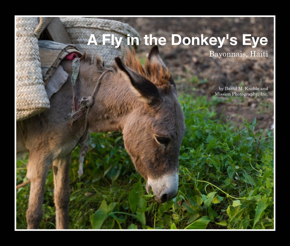 View A Fly in the Donkey's Eye by Mission Photography