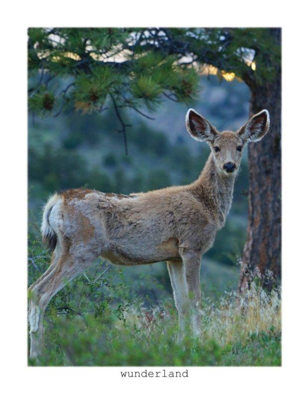 View Mule Deer Big Ears by Jordan Wunderlich