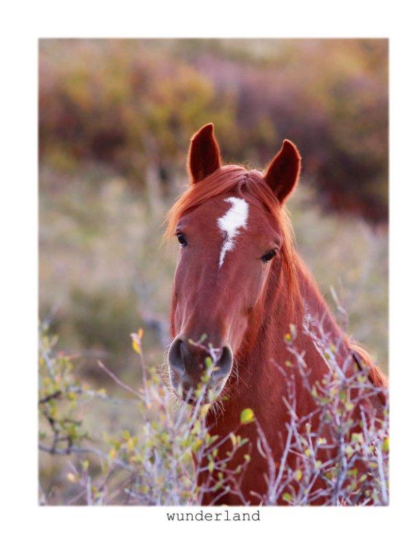 View Equine Portraiture by Jordan Wunderlich