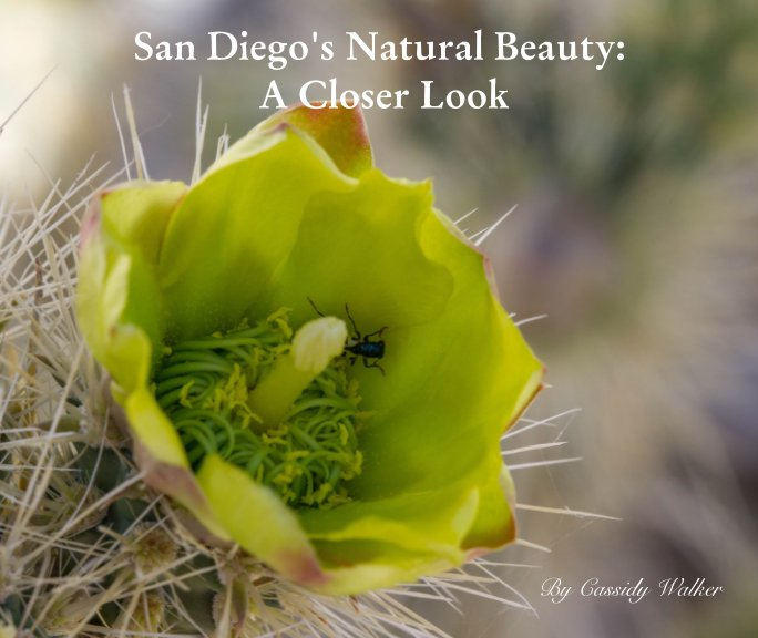 View San Diego's Natural Beauty: A Closer Look by Cassidy Walker