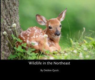Wildlife in the Northeast