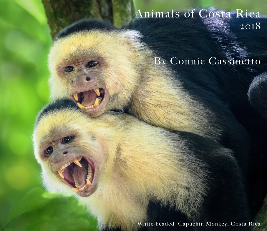 View Animals of Costa RIca by Connie Cassinetto