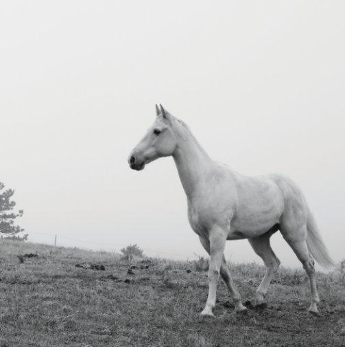 View Equine Portraiture - Petite Volume One by Jordan Wunderlich