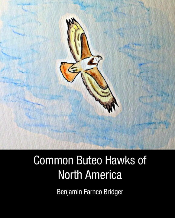 View Common Buteo Hawks of North America by Benjamin Farnco Bridger