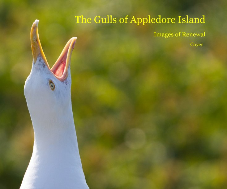 View The Gulls of Appledore Island by Coyer