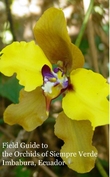 Ver Guide to the Orchids of Siempre Verde Imbabura, Ecuador por Alex Reynolds