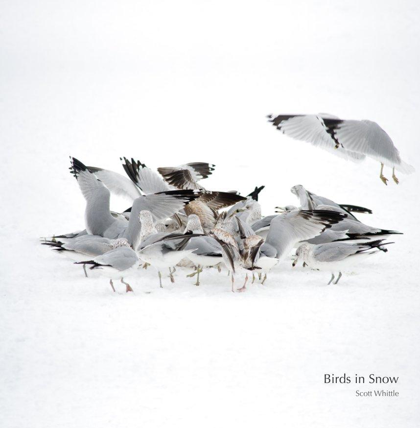 View Birds in Snow by Scott Whittle