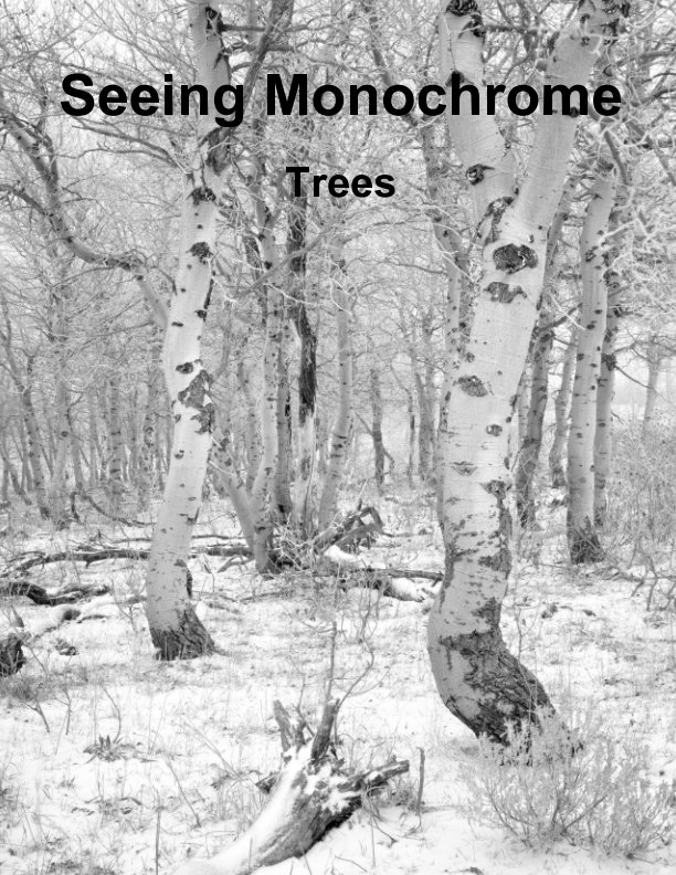 View Seeing Monochrome:  Trees by David Patton