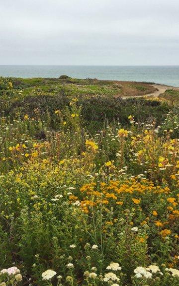 View Coastal by Coco Peezy