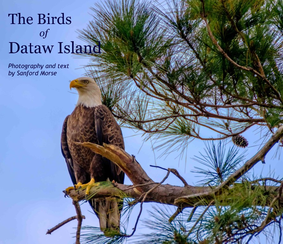 View The Birds of Dataw Island by Photography by Sanford Morse
