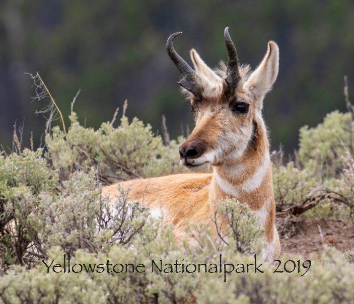 Yellowstone 2019 nach Tanja Hildebrand anzeigen