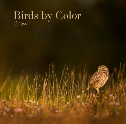 View Birds by Color - Brown by Ray Hennessy