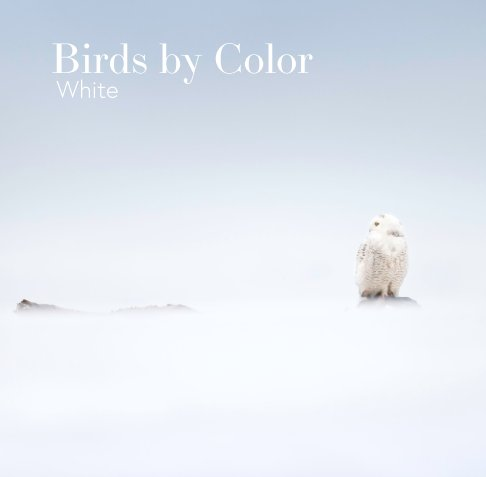 View Birds by Color - White by Ray Hennessy