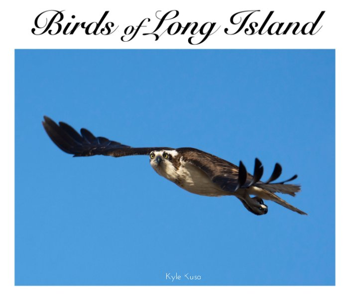 View Birds of Long Island (10×8 in, 25×20 cm hardcover) by Kyle Kusa