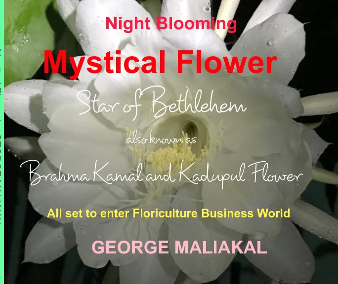 Ver Mystical Flower - Star of Bethelehem por GEORGE MALIAKAL