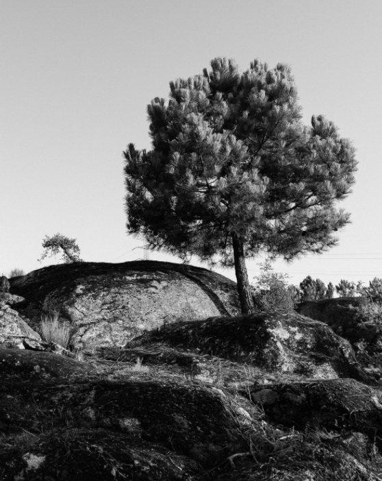 View trás-os-montes by rui delgado alves