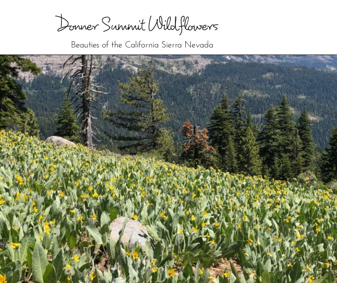 View Wildflowers of Donner Summit by Mary Loomis