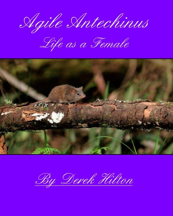 View Agile Antechinus Life as a Female by Derek Hilton