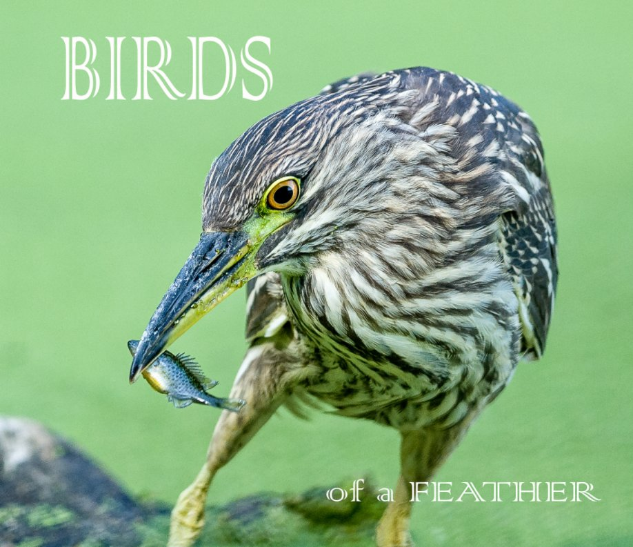 View Birds of a Feather by Bill Reid