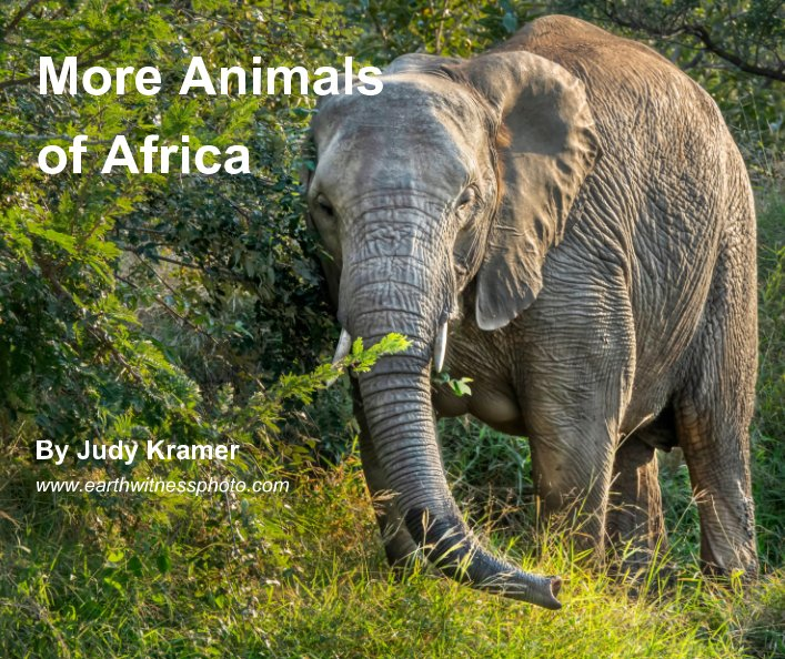 View More Animals of Africa by Judy Kramer
