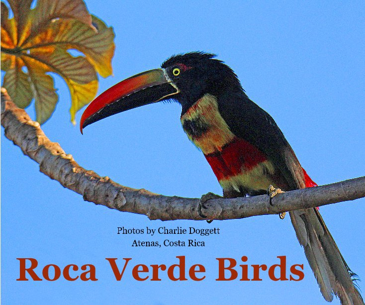 View Roca Verde Birds by Photos by Charlie Doggett