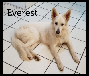 Everest book cover