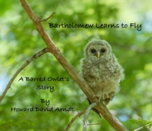 Bartholomew Learns to Fly book cover