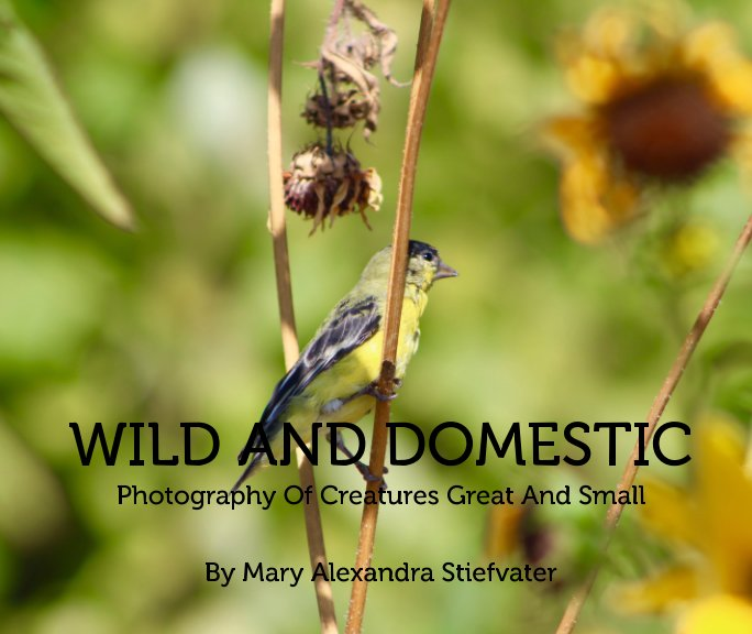 View Wild And Domestic by Mary Alexandra Stiefvater
