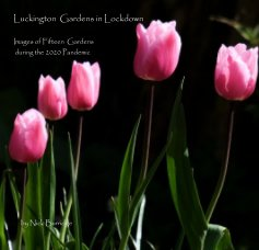 Luckington Gardens in Lockdown Images of Fifteen Gardens during the 2020 Pandemic book cover