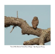 Little Owls of Charlton Village book cover