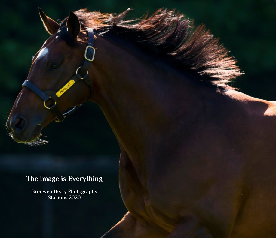 View The Image is Everything: 2020 Stallion Brochure.  Second Edition by Bronwen Healy Photography