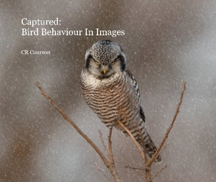 Captured: Bird Behaviour In Images book cover