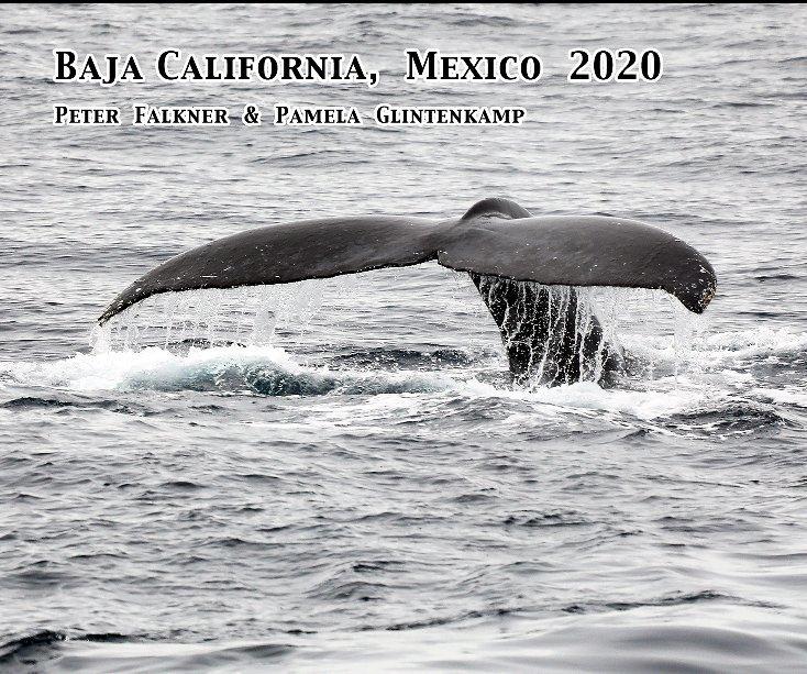 View Baja California Mexico 2020 by P Glintenkamp and P Falkner