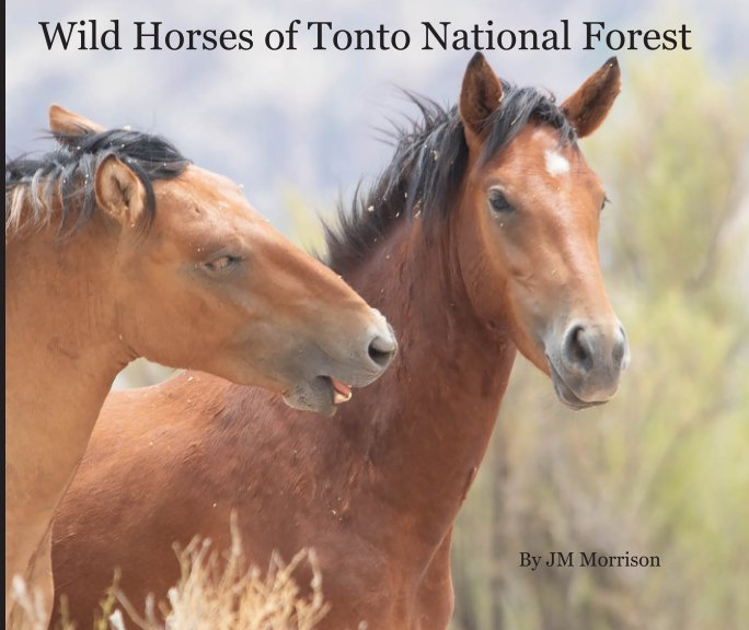 View Wild Horses of Tonto National Forest by JM Morrison
