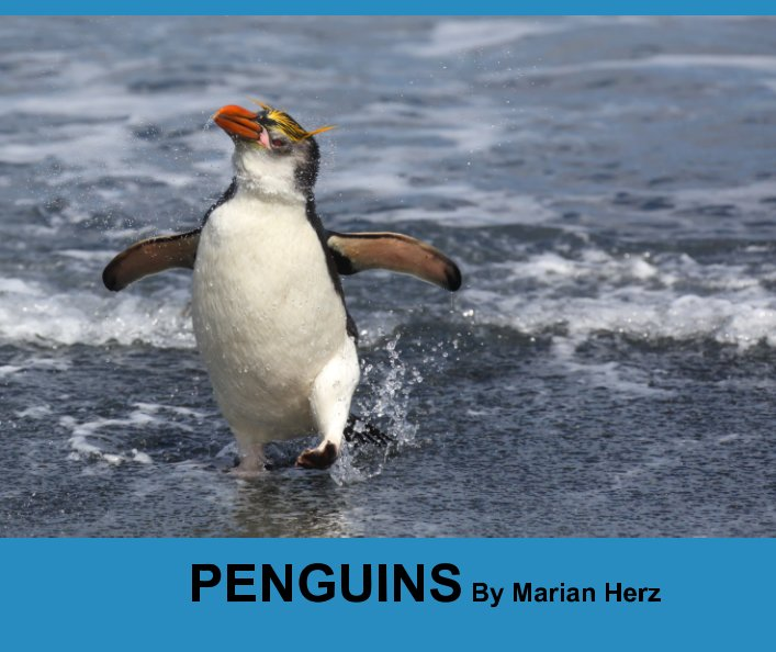 View Visions from my Travels - Penguins by Marian Herz