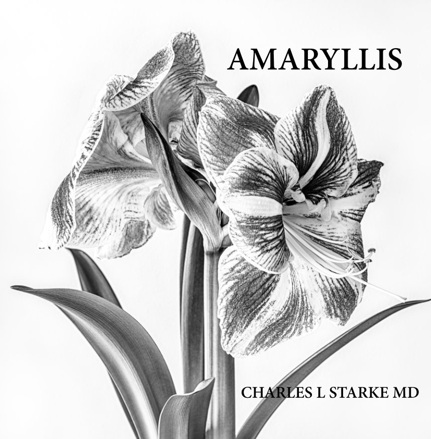 View Amaryliis by Charles L Starke MD