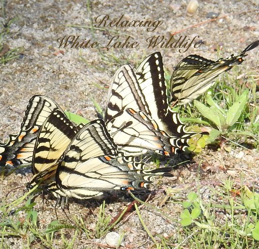 View Relaxing White Lake Wildlife by Carolyn and Bruce Waddell
