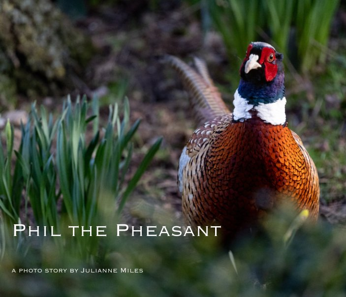 View Phil the Pheasant by Julianne Miles