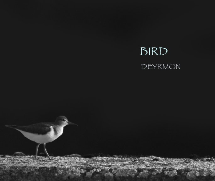 Ver Bird por DEYRMON