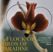Birds of Paradise book cover