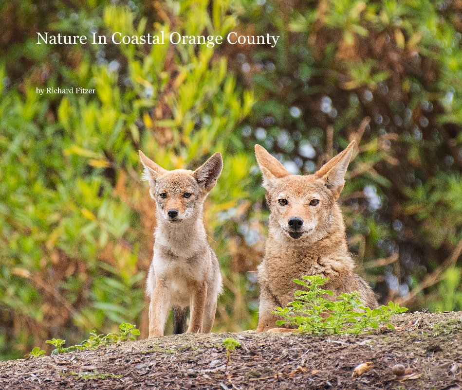 View Nature In Coastal Orange County by Richard Fitzer