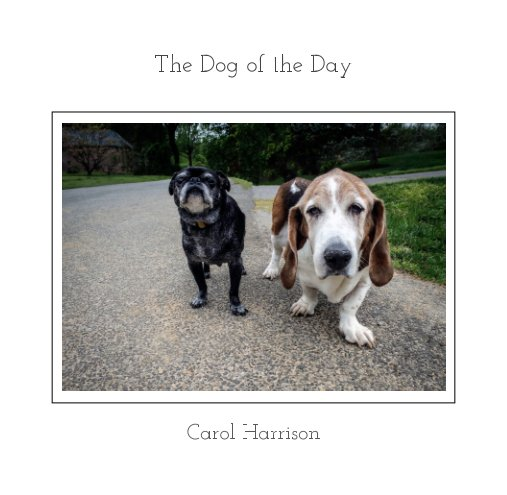 View The Dog of the Day by Carol Harrison