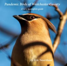 Pandemic Birds of Westchester County book cover