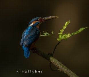 Kingfisher book cover