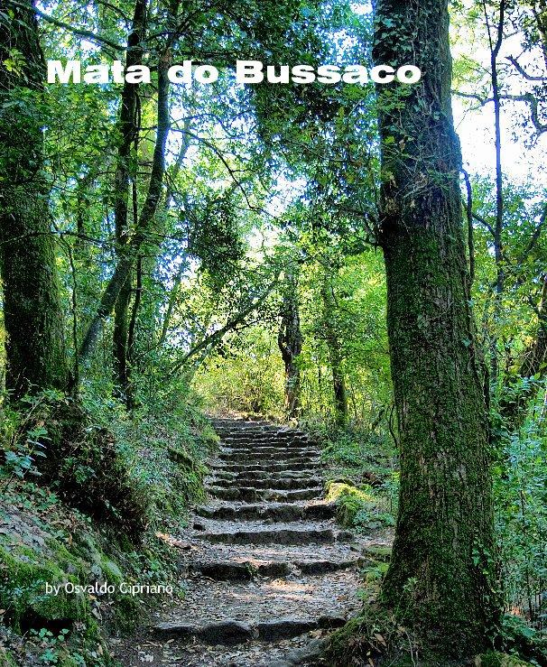 View Mata do Bussaco by Osvaldo Cipriano